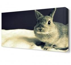 Dekorsevgisi - Tavşan Canvas Tablo (1)