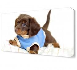 Dekorsevgisi - Kıyafetli Yavru Köpek Canvas Tablo (1)