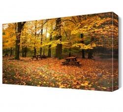 Sonbaharda Orman Manzarası Canvas Tablo - Thumbnail