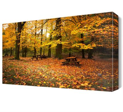 Sonbaharda Orman Manzarası Canvas Tablo