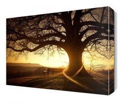 Büyük Ağaç Manzarası Canvas Tablo
