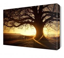 Büyük Ağaç Manzarası Canvas Tablo - Thumbnail