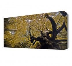 Dekorsevgisi - Ağaç Manzarası Canvas Tablo (1)