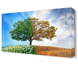 Dekorsevgisi - İlkbahar ve Sonbahar Ağacı Canvas Tablo (1)