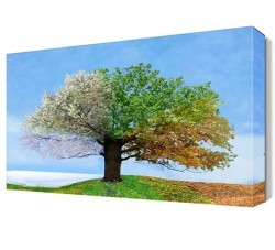 Dekorsevgisi - Dört Mevsim Ağacı Canvas Tablo (1)