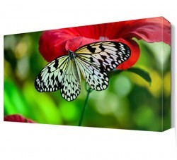 Dekorsevgisi - Gülün Üzerinde Kelebek Canvas Tablo (1)