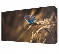 Dekorsevgisi - Mavi Kelebek Canvas Tablo (1)