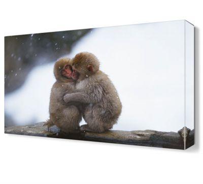 Sevimli Maymunlar Canvas Tablo