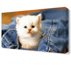 Beyaz Yavru Kedi Canvas Tablo - Thumbnail