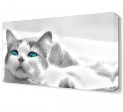 Dekorsevgisi - Beyaz Kedi Canvas Tablo (1)