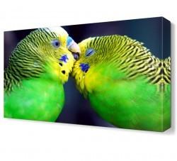 Dekorsevgisi - Muhabbet Kuşları Canvas Tablo (1)