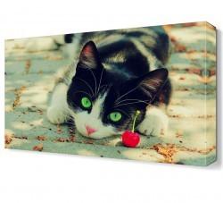 Dekorsevgisi - Kedi ve Kiraz Canvas Tablo (1)