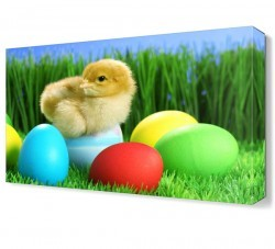 Dekorsevgisi - Civciv ve Renkli Yumurtalar Canvas Tablo (1)