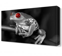Dekorsevgisi - Kırmızı Gözlü Kurbağa Canvas Tablo (1)