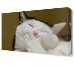Dekorsevgisi - Gülümseyen Kedi Canvas Tablo (1)