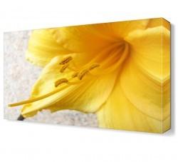 Dekorsevgisi - Sarı Çiçek Canvas Tablo (1)