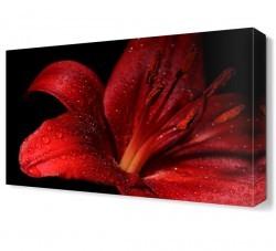 Dekorsevgisi - Kırmızı Çiçek2 Canvas Tablo (1)