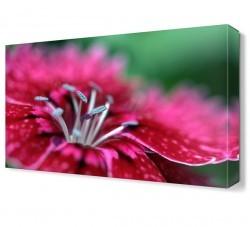Dekorsevgisi - Pembe Gölgeli Çiçek Canvas Tablo (1)