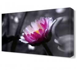 Dekorsevgisi - Mor Beyaz Çiçek Canvas Tablo (1)