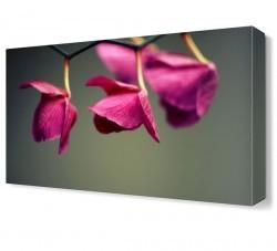 Dekorsevgisi - Pembe Yapraklı Çiçek Canvas Tablo (1)