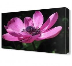 Dekorsevgisi - Güzel Çiçek Canvas Tablo (1)