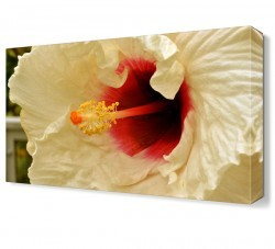 Dekorsevgisi - Kırmızı Beyaz Çiçek Tablosu (1)