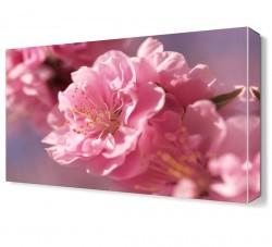 Dekorsevgisi - Pembe Çiçekler2 Tablosu (1)