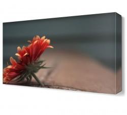 Dekorsevgisi - Kasımpatı Çiçeği Tablosu (1)