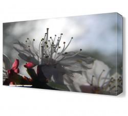 Dekorsevgisi - Çiçek Sapları Tablosu (1)