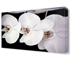 Dekorsevgisi - Beyaz Çiçekler Tablosu (1)