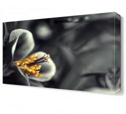 Siyah Beyaz Çiçek Tablosu - Thumbnail