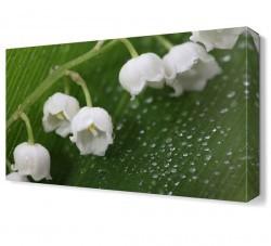 Dekorsevgisi - Beyaz Küçük Çiçekler Tablosu (1)