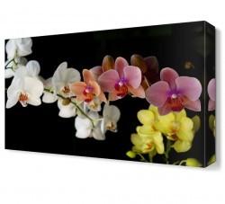 Dekorsevgisi - Renkli Çiçekler4 Tablosu (1)