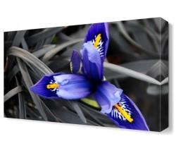Dekorsevgisi - Mavi Çiçek3 Tablosu (1)