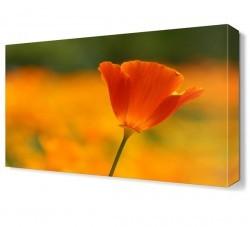 Dekorsevgisi - Çiçek2 Tablosu (1)