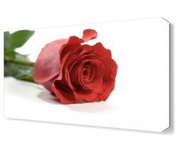 Dekorsevgisi - Rose Tablosu (1)