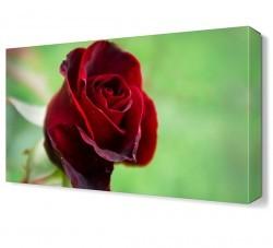 Dekorsevgisi - Red Rose Tablosu (1)