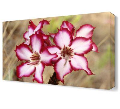 Pembe Beyaz Çiçek Tablosu