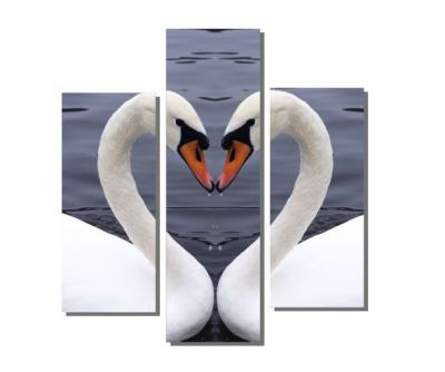 Kuğuların Kalp Şekli Tablosu