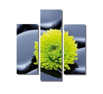 Taşlar Üzerindeki Yeşil Çiçek Tablosu